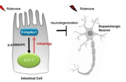 Image shows a cell and neuron.