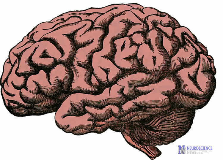 Image shows a brain