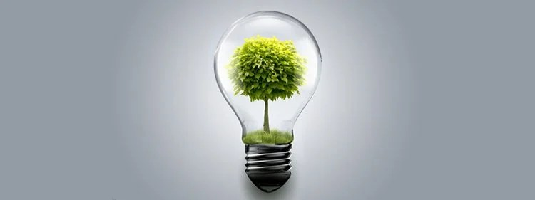 Image shows a light bulb with a tree inside.