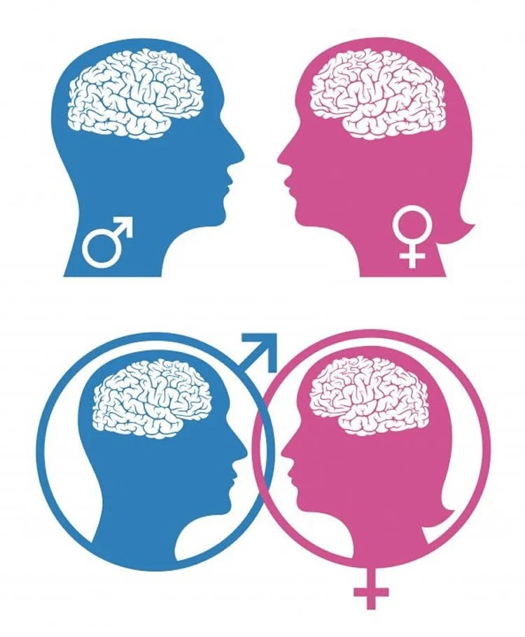Brain Regulates Social Behavior Differences in Males and Females