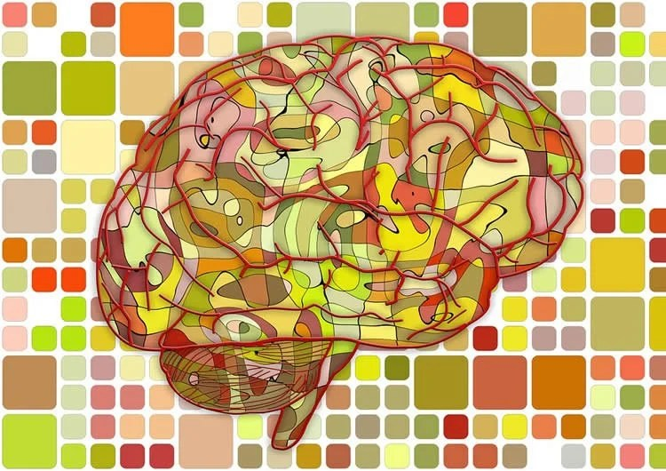 Image shows a brain made up of multicolors.