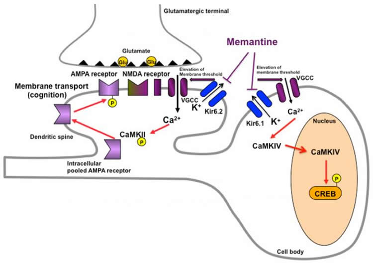 Image shows a schematic for the blockade of Kir6.