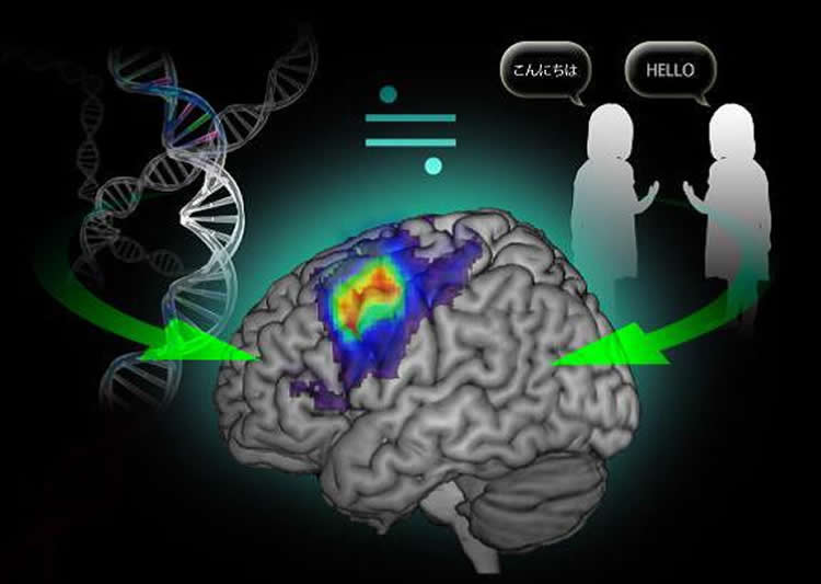 Image shows a brain and DNA strand.