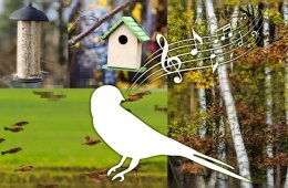 Image shows a drawing of a singing bird.