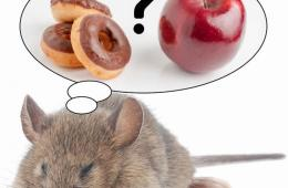 Image shows a sleeping mouse dreaming about food.