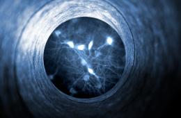 Image shows neurotensin.