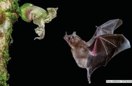 Image shows a bat and a flower.