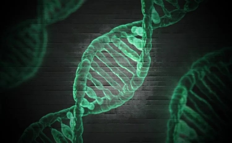 Image shows DNA strands in green.