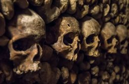 Image shows skulls and bones.