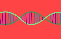 a dna strand is shown.