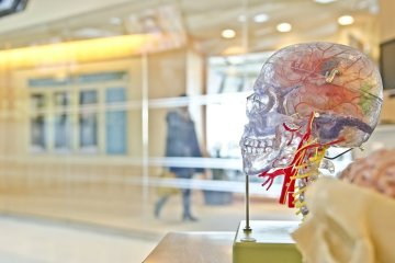 Image shows a statue of a brain.