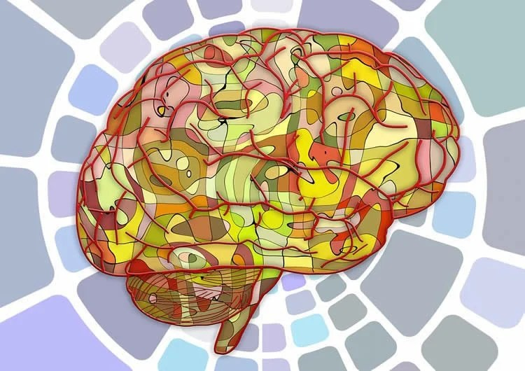 Link Between Gut Microbes And Brain Structure In Ibs Discovered