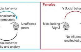 Image shows a mouse diagram.