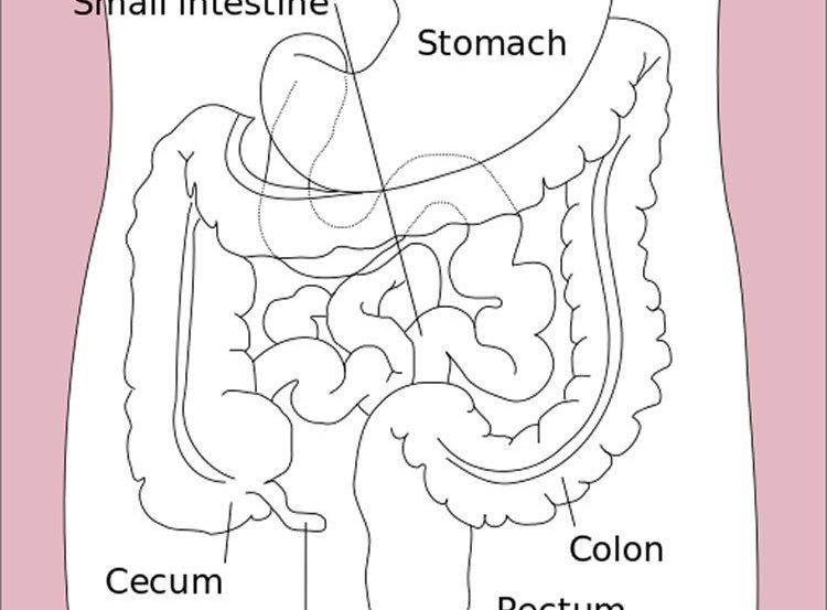 Image shows a diagram of the GI tract.