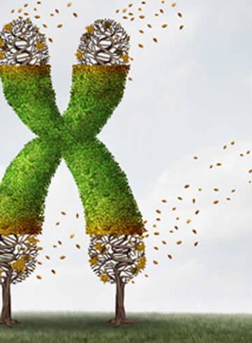 Image shows a letter X.