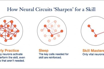 Image shows a diagram of neural circuits.