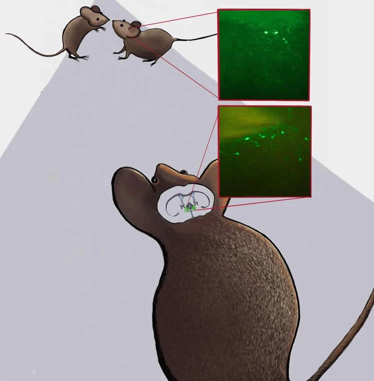 Image shows a mouse and neurons.
