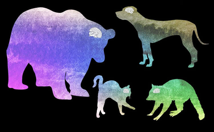 different animals are shown