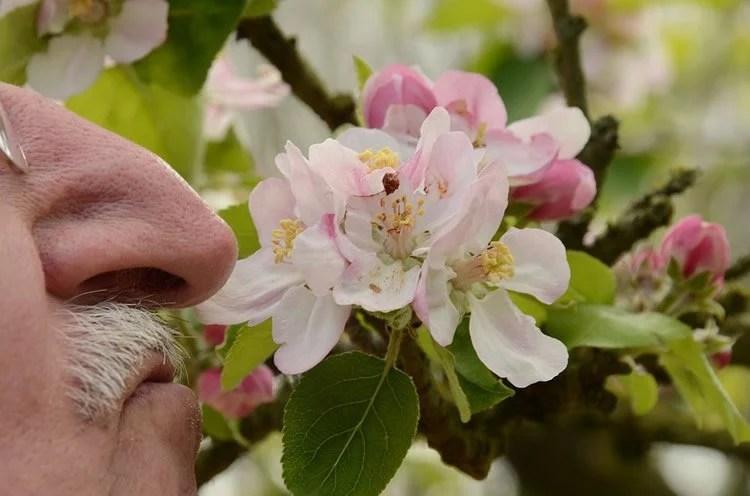 man smelling rose