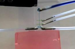 Image shows the nanotube..