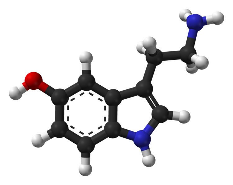 Image shows the structure of serotonin.
