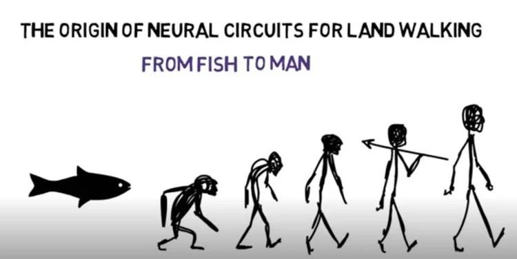 evolution cartoon