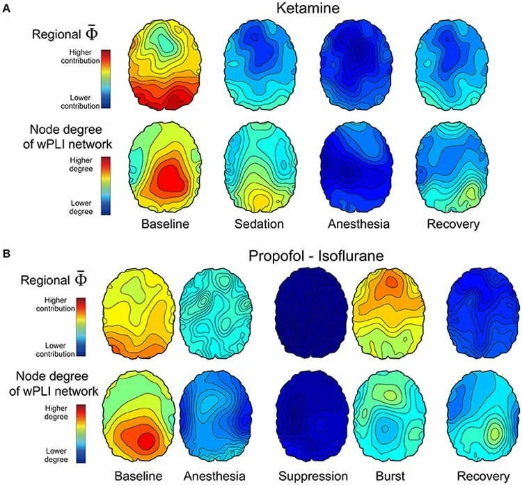 What Happens in the Brain During Unconsciousness