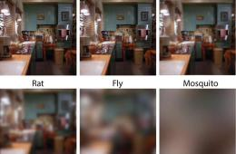 the same scene of a kitchen with different blurriness