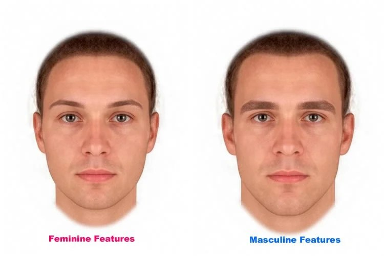 Women S Preference For Masculine Faces Not Linked To