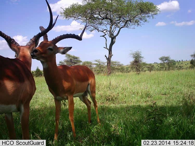 wild animals are shown