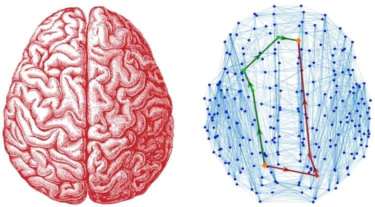 a brain and a brain network