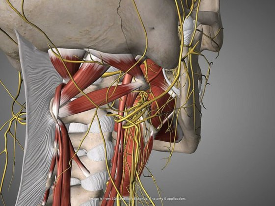 Gut Branches of Vagus Nerve Essential Components of Brain\'s Reward ...