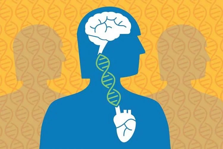 a brain linked to the heart by a DNA strand