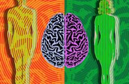 a drawing of a male and female and a brain