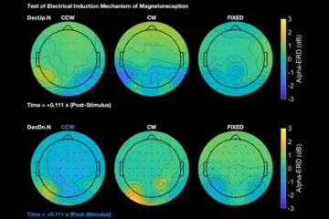 An eeg readout of how the brain responds to the earth's magnetic field