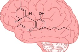 This shows a brain with the chemical structure of cbd