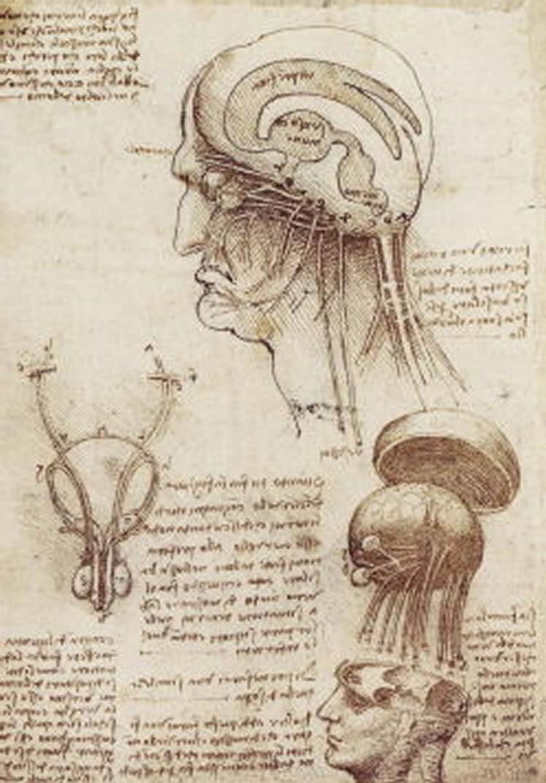 This is da Vinci's anatomy of the brain sketch
