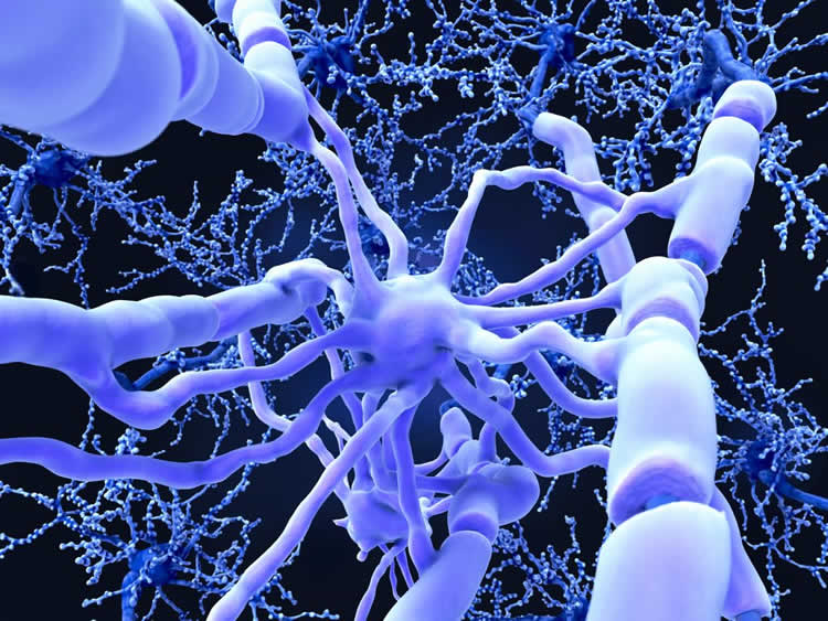 Study shows promise in repairing damaged myelin
