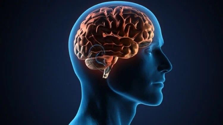 Brain stimulation reverses age-related memory loss