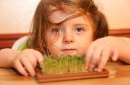 This shows the researcher's daughter and the broccoli sprouts she is growing