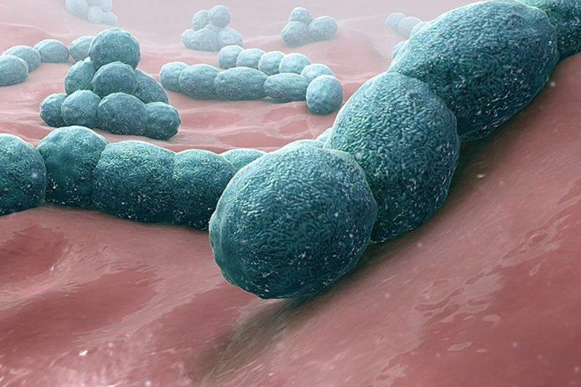 This shows the meningitis bacteria