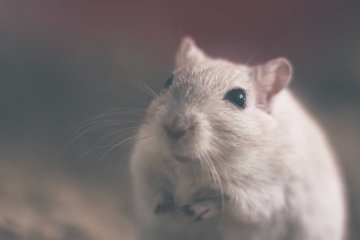 This is a cute mouse