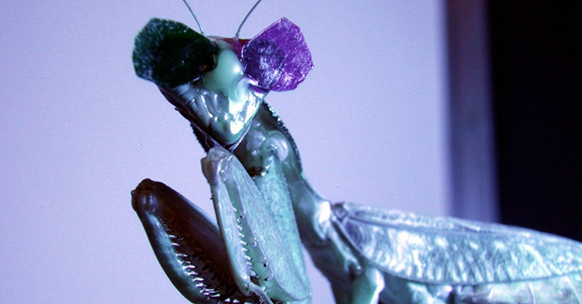 This shows a praying mantis wearing the 3D glasses