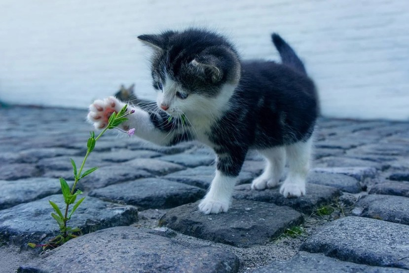 This is an adorable kitten