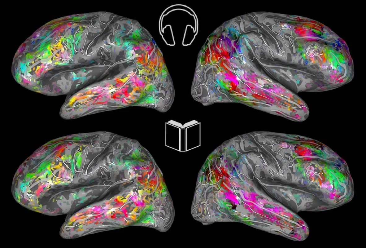 This shows the brain maps