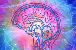 behavioral neuroscience Research Articles - Neuroscience News