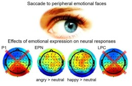 This shows an eye and EEG readouts
