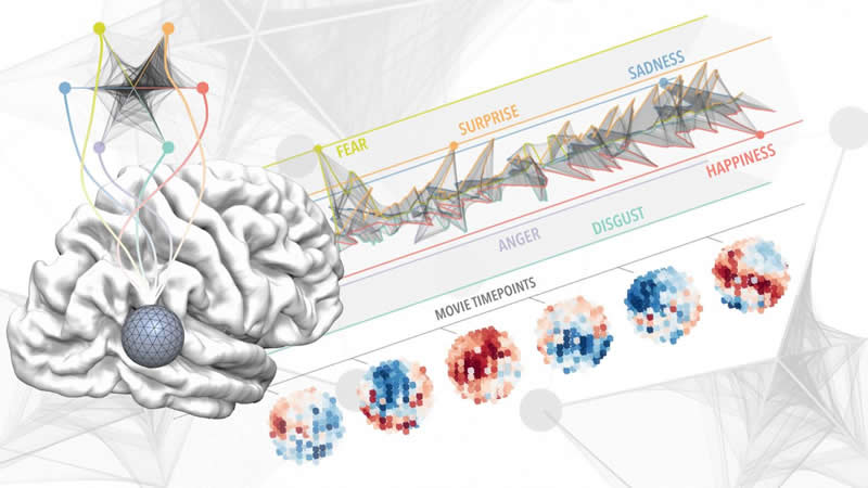 This shows the brain region mapped