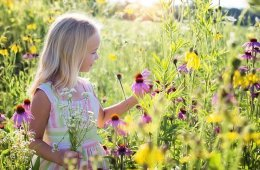 This shows a little girl in a field of flowers