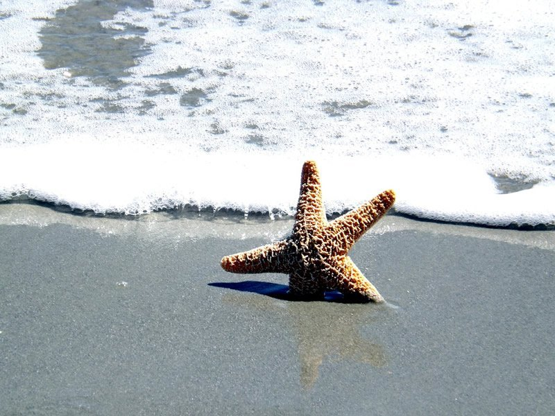 This shows a sea star on a beach